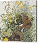 Meadow Lark Canvas Print