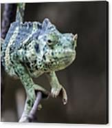 Mellers Chameleon Portrait Canvas Print