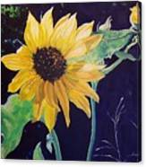 Midday Sunflower Canvas Print
