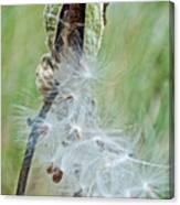 Milkweed Pod On Trail To North Beach Park In Ottawa County, Michigan Canvas Print