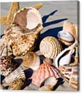 Mix Group Of Seashells Canvas Print