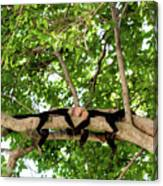 Monkey Love  1 Canvas Print
