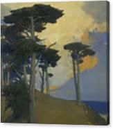 Monterey Cypress Canvas Print