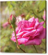 Moondrops 85 Hybrid Tea Rose, Pink Rose Originally Produced By  Canvas Print