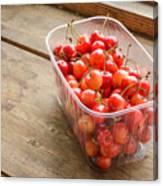 Morello Cherries Canvas Print