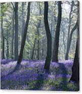 Morning Bluebells Canvas Print