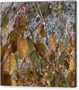 Morning Frozen Canvas Print