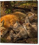 Mother Fox And Her Kits Canvas Print