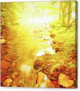 Mountain Stream In Summer Mist Canvas Print