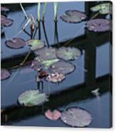 Msu Spring 8 Canvas Print