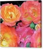 Multi-color Roses Canvas Print