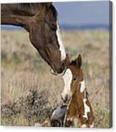 Mustang Mare And Foal Canvas Print