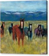 Mustangs In Southern Colorado Canvas Print