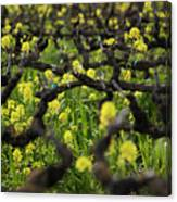 Mustard In The Vineyard Canvas Print