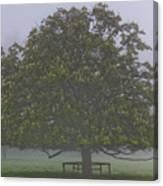 Mystic Tree Canvas Print