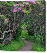 Nature's Tunnel Canvas Print