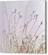 Nerve Cell Culture, Sem Canvas Print