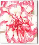 Nice Carnation Canvas Print
