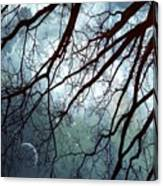 Night Sky In The Woods Canvas Print