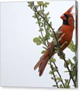 Northern Cardinal Portrait Canvas Print