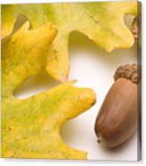 Oak Leaves And Acorns Canvas Print