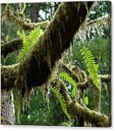 Office Art Forest Ferns Green Fern Giclee Prints Baslee Troutman Canvas Print
