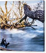 Old Dead Trees On Shores Of Edisto Beach Coast Near Botany Bay P Canvas Print