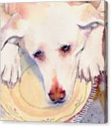 Old Dogs Are The Best Canvas Print