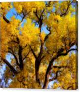 Old Giant  Autumn Cottonwood Orton Canvas Print