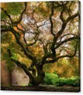 Old Japanese Maple Tree Canvas Print