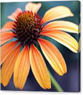 Orange Coneflower Canvas Print