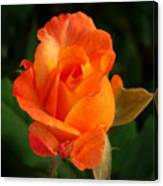 Orange Rose Canvas Print