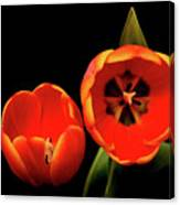 Orange Tulip Macro Canvas Print
