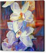 Orchids Behind Glass Canvas Print