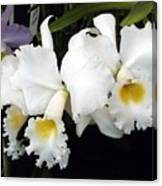 Orchids In White Canvas Print