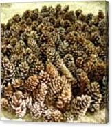 Organize Pinecones Canvas Print