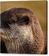 Oriental-small-clawed-otter Canvas Print