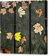 Original Autumn Foliage Canvas Print