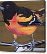 Oriole 2 Canvas Print