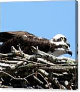 Osprey Pair Canvas Print