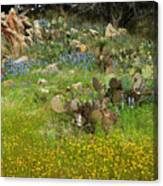 Outcropping Of Color Canvas Print