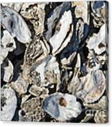 Oyster Shells Canvas Print