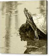 Painted Turtle On Mud In A Marsh Canvas Print