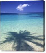 Palm Shadows Canvas Print