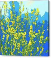Palo Verde Spring Canvas Print