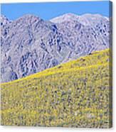 Panoramic View Of Desert Gold Yellow Canvas Print