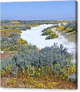 Panoramic View Of White Salt And Desert Canvas Print
