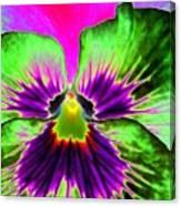 Pansy Power 82 Canvas Print