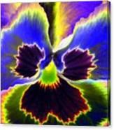 Pansy Power 87 Canvas Print