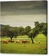 Pasturing Cows Canvas Print